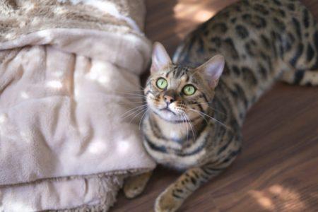 フローリングに布団で寝たい!吸湿性のある畳ならカビも発生しない?