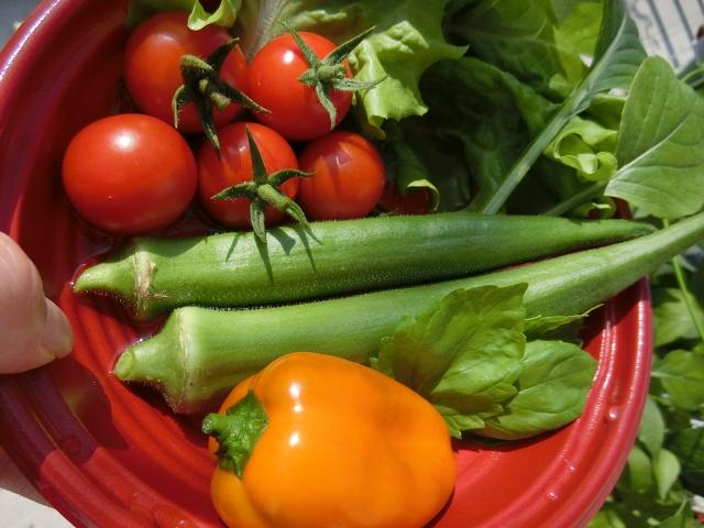 オクラの栄養と効果効能!オクラに含まれる栄養は加熱で減少する?
